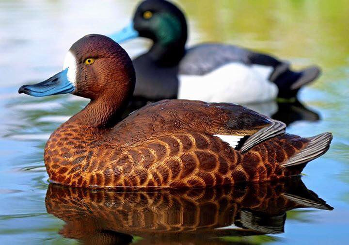 Products Page 4 - Canadian Waterfowl Supplies