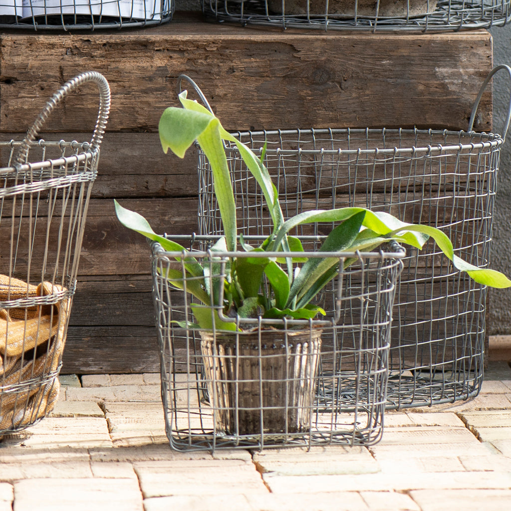 Small Wire Basket With Open Handle-basket-The Little House Shop