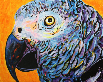 African Grey in Orange