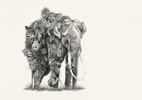 Asian Elephant / Asia - Giclée Print