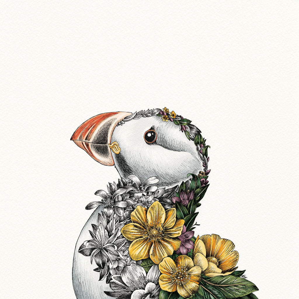 Atlantic Puffin - Giclée Print