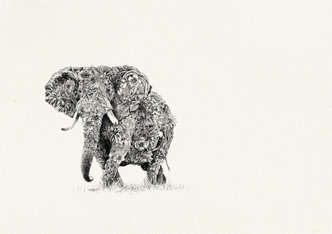 African Elephant by Nathan Ferlazzo