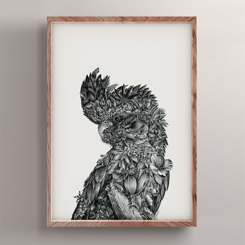 Red-tailed Black Cockatoo - Giclée Print (Black & White)