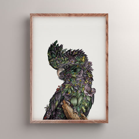 Red-tailed Black Cockatoo - Giclée Print (Coloured)