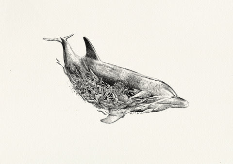 Bottlenose Dolphin - ORIGINAL