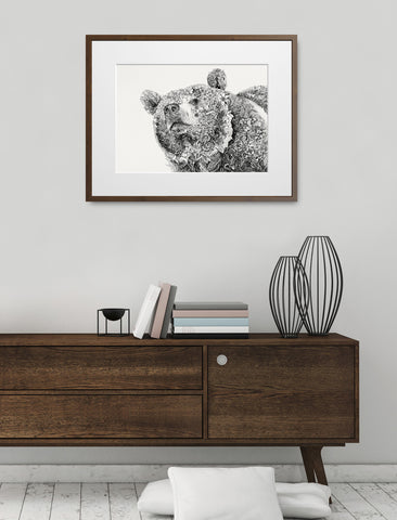 Himalayan Brown Bear - Giclée Print