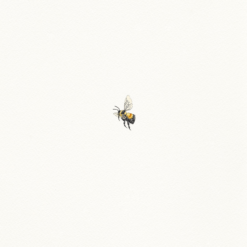 Rusty Patched Bumble Bee - Giclée Print