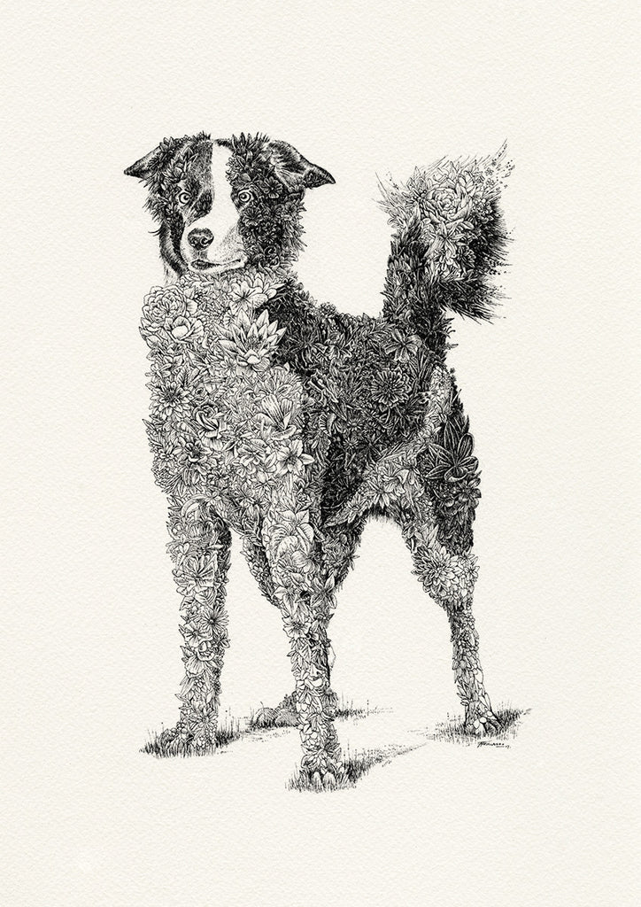 Border Collie - Giclée Print