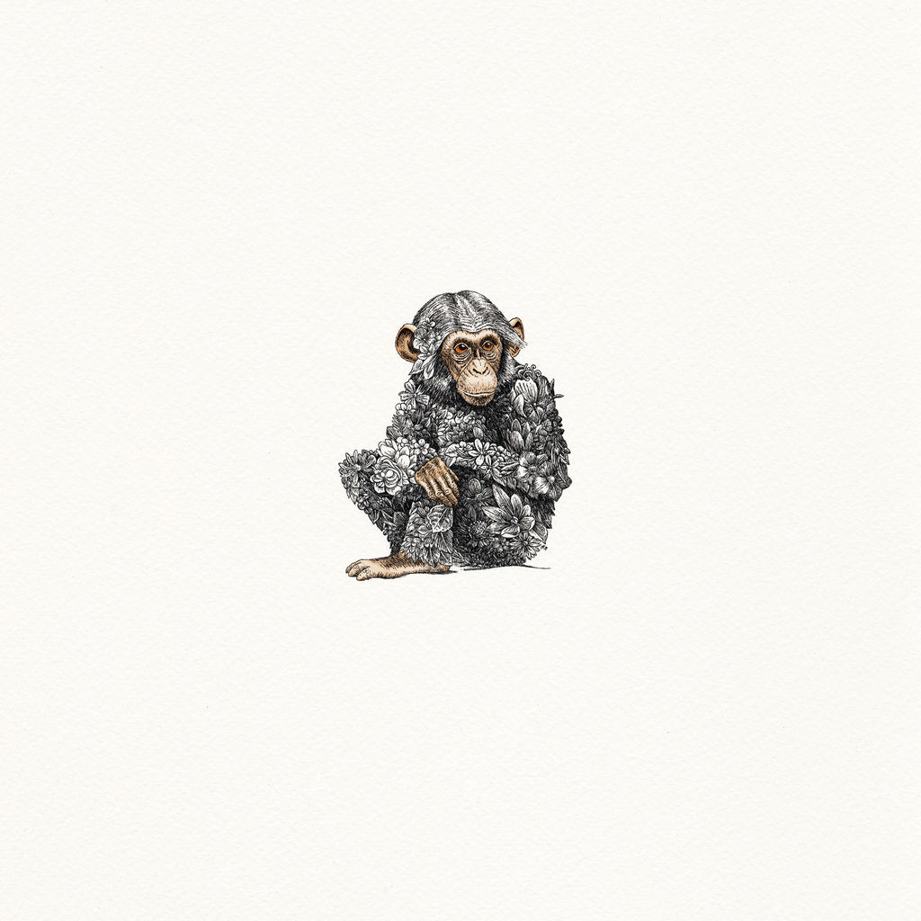 Chimpanzee Infant - Giclée Print