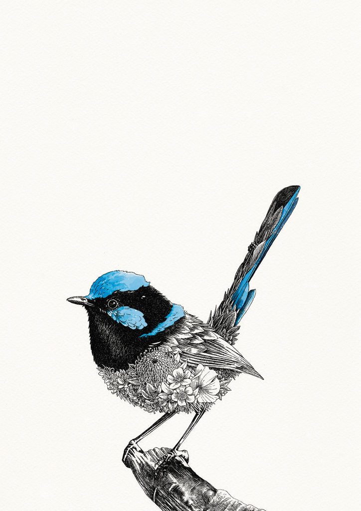 Superb Fairy-wren - Giclée Print