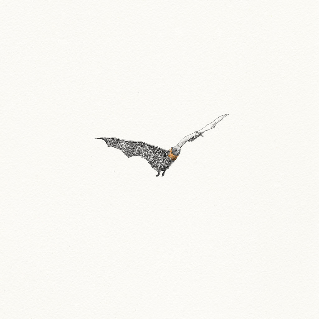 Grey-headed Flying Fox - Giclée Print