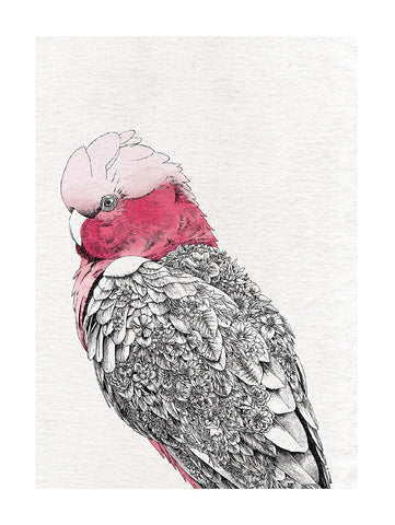 Galah - Tea Towel