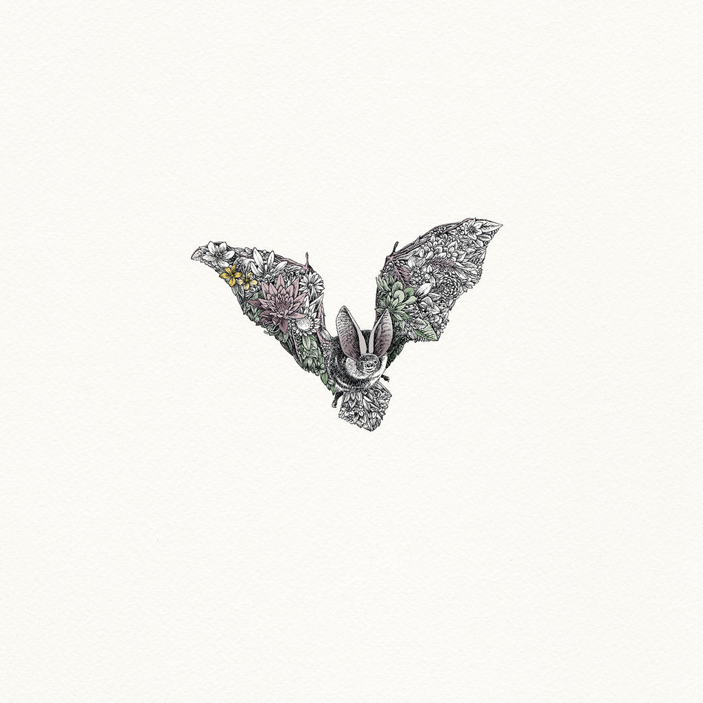 Grey Long-Eared Bat - Giclée Print