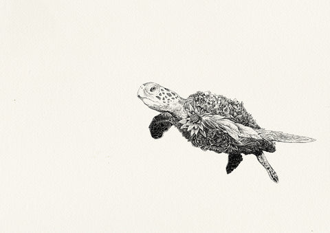 Green Sea Turtle - Giclée Print