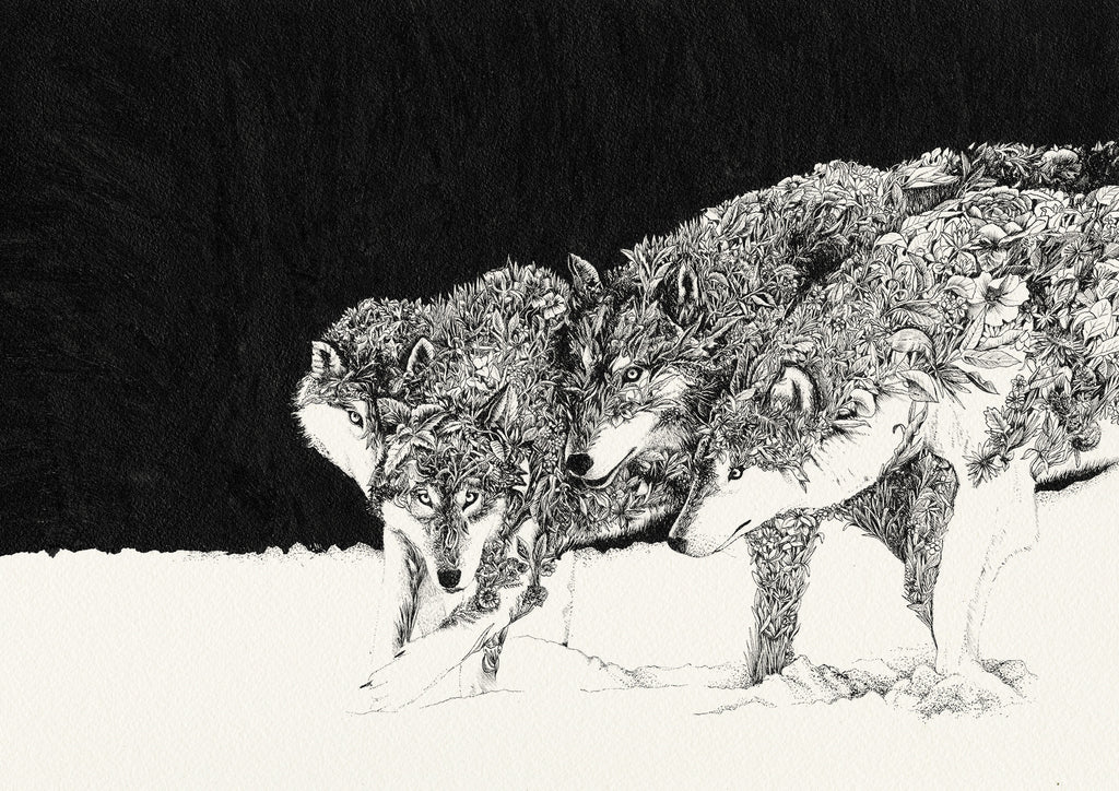 Grey Wolves by Nathan Ferlazzo