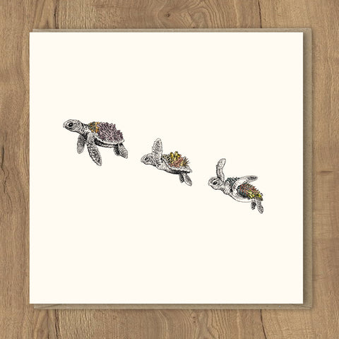 Turtle Hatchlings - Greeting Card Set