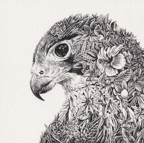 New Zealand Falcon - Giclée Print