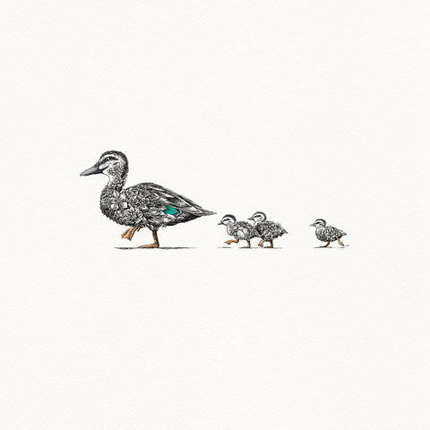 Pacific Black Duck - Giclée Print