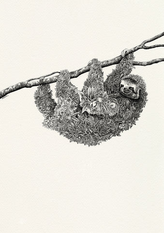 Brown-Throated Sloth - Giclée Print