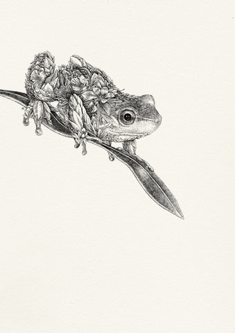 Spotted Tree Frog - Giclée Print
