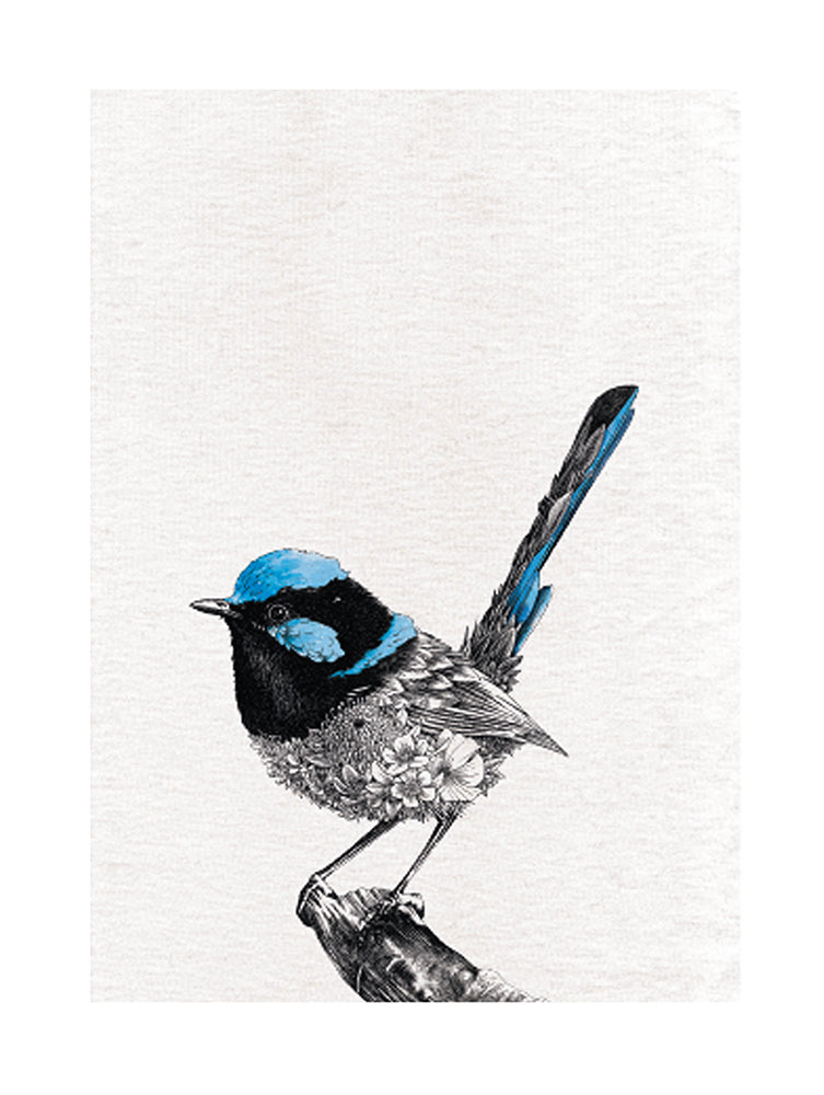 Superb Fairy-Wren - Tea Towel