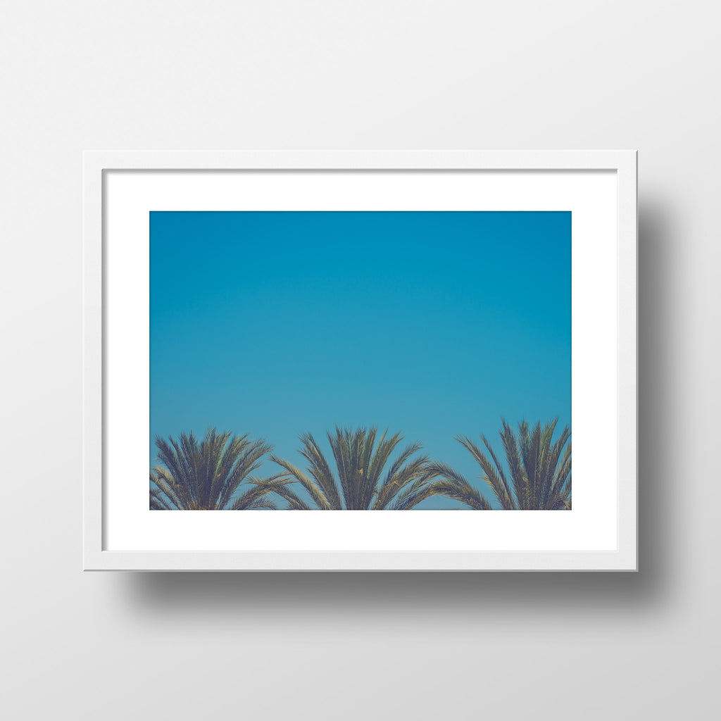 """Palm Blue"" Print by Jon Mesic, 18x24"""