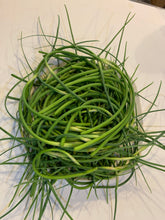 Load image into Gallery viewer, GOURMET HARDNECK GARLIC SCAPES