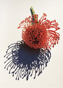 Unfolding Pincushion
