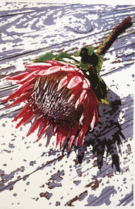 Protea on old table