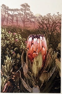 Table Mountain Protea