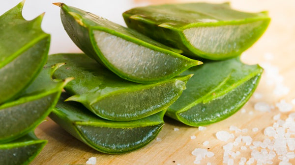 Aloe Vera - The True Grandma-favored Ingredient for Hydrating Skin and Hair