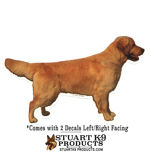 Golden Retriever Body | Pair