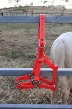 Load image into Gallery viewer, Full Red Horse Halter