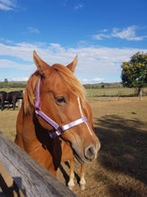 Load image into Gallery viewer, Full Lavender Horse Halter Larger Fit