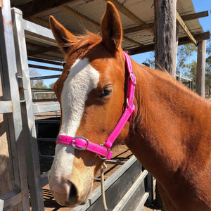 Full Cerise Horse Halter Larger Fit