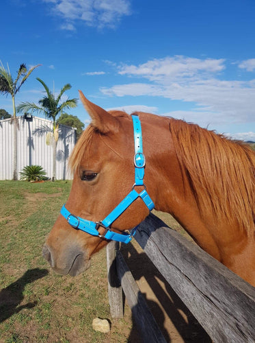Full Cyan Blue Horse Halter Larger Fit