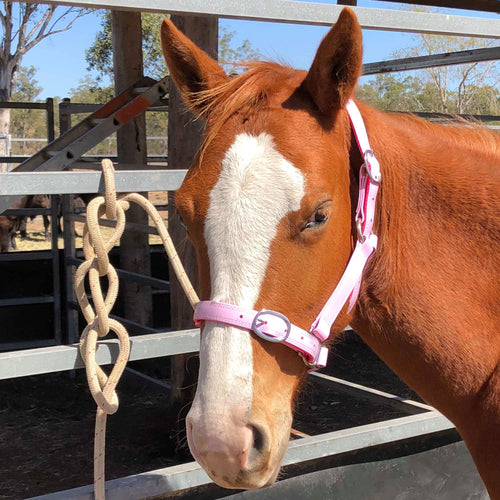 Full CC Pink Horse Halter Larger Fit