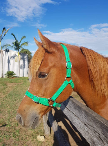 Full Green Horse Halter Larger Fit