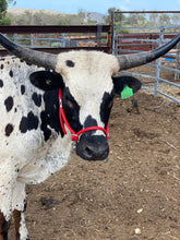 Load image into Gallery viewer, Cattle Halter Small (Calf)