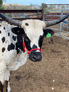 Cattle Halter Small (Calf)