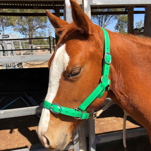 Pony Green Horse Halter Larger Fit