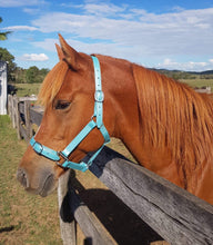 Load image into Gallery viewer, Mini (Foal) Ocean Shimmer Horse Halter