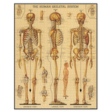 Skeletal System Jigsaw Puzzle