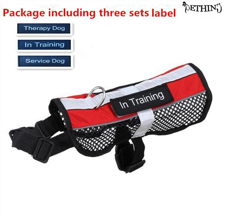 Service Dog in Training Dog Harness