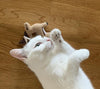Cat Toy | cat with gazelle