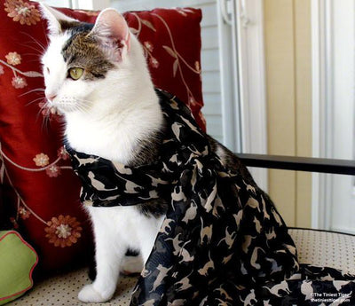 Cat Fashion | Cat  Scarf - Triple T Studios - 2