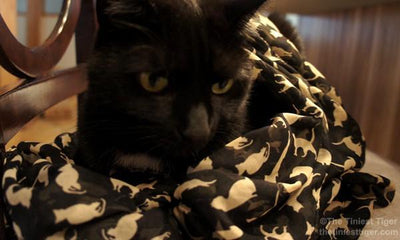Cat  Scarf - Triple T Studios - 6