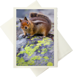 Friend In Nature (Greeting Card)