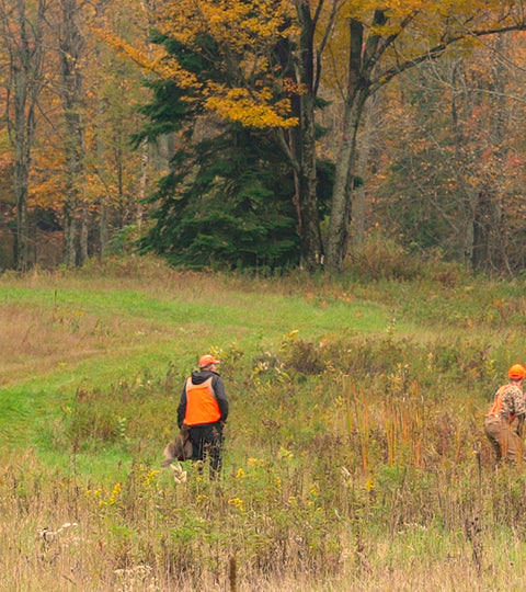 Michigan Pheasant Hunt