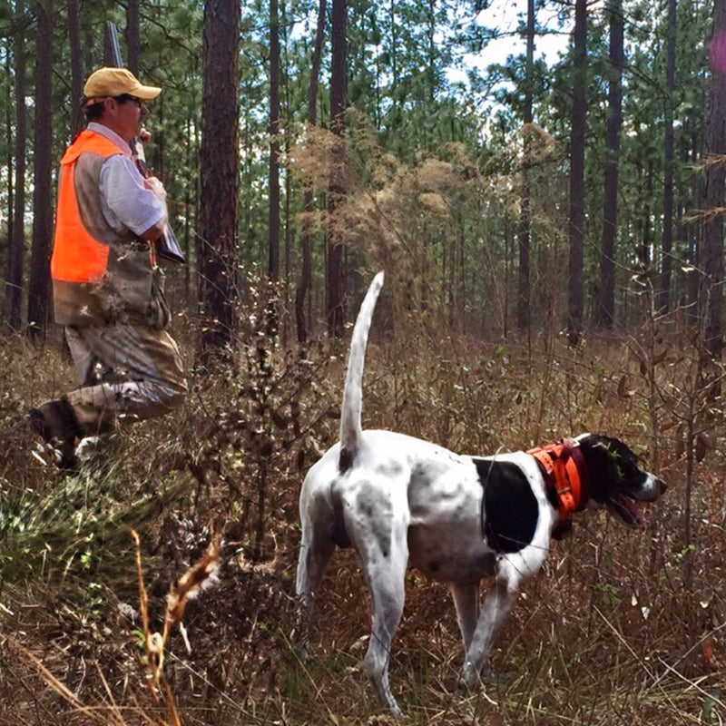 Signature Expedition | Authentic Georgia Quail Hunt - Ball and Buck